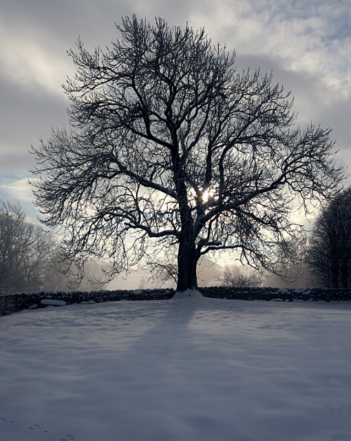 Winter Ash