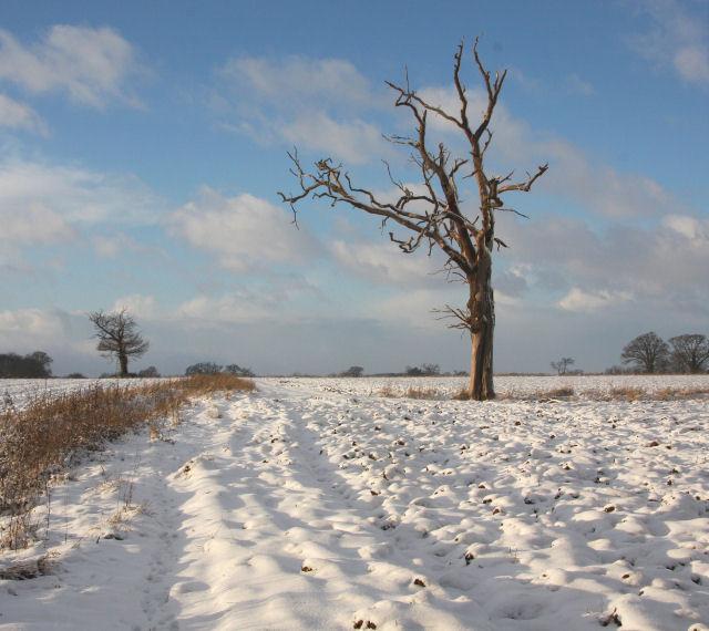 Farmland at Little Saxham