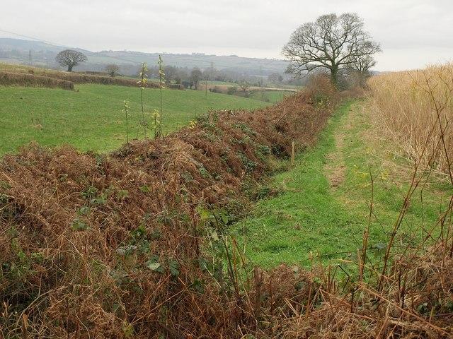 Field boundary west of Broad Oak Wood