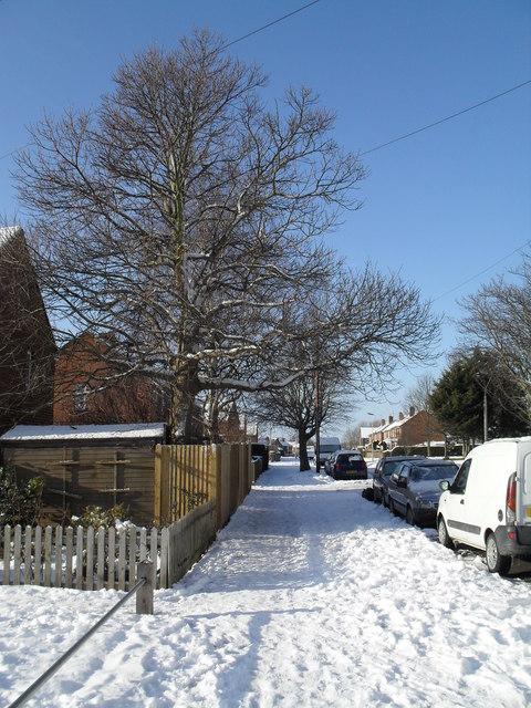 Winter trees in Swarraton Road