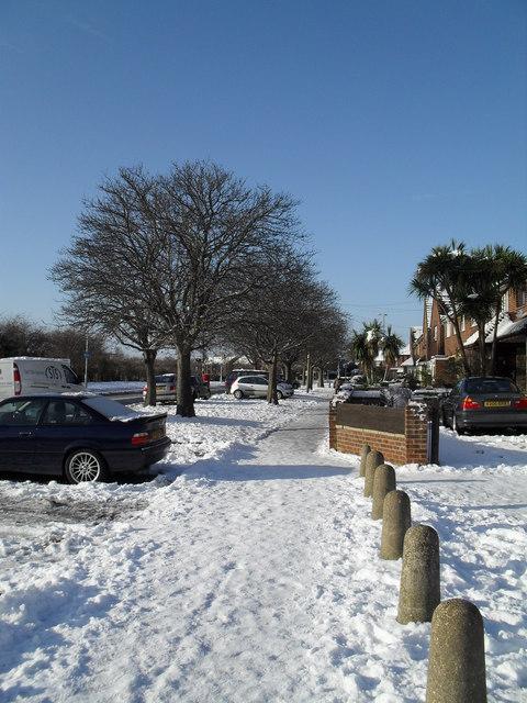 Winter trees in Crossland Drive