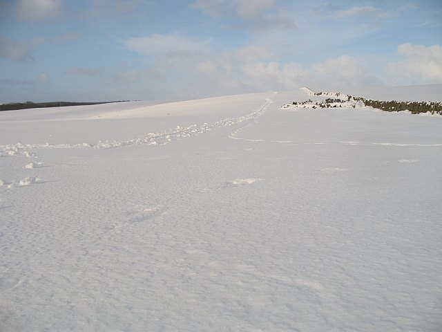 Snow covered grassland
