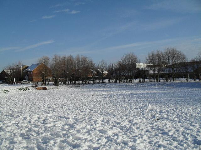 Winter trees at Crossland Rec