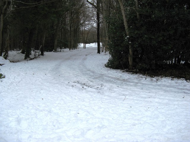 Track through Slindon Wood