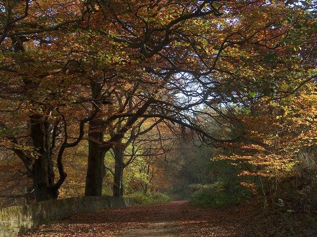 Blacka Moor walk through Bole Hill Woods