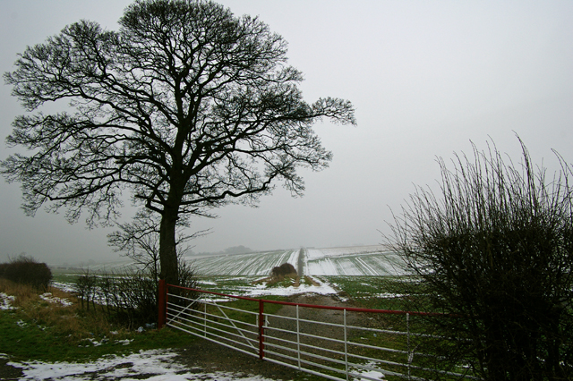 The Wolds in January