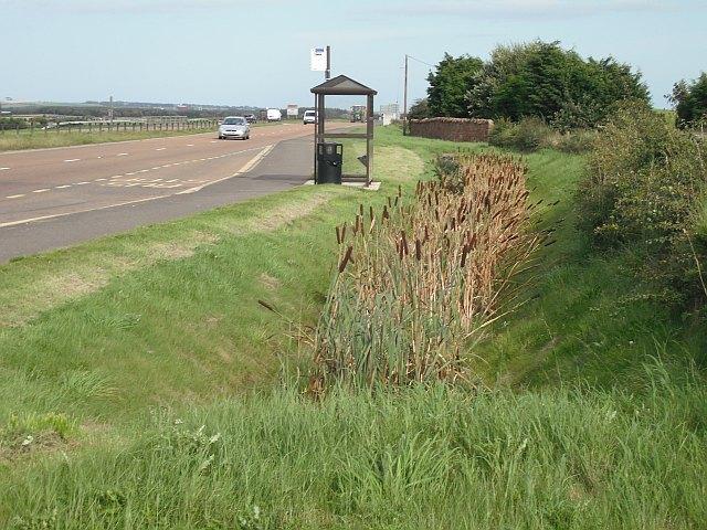 Bus stop, Salmond's Muir