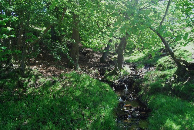 Stream in its own green valley