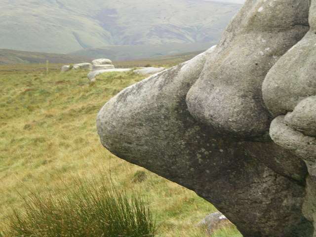 Hard noses on the moors - Bowland