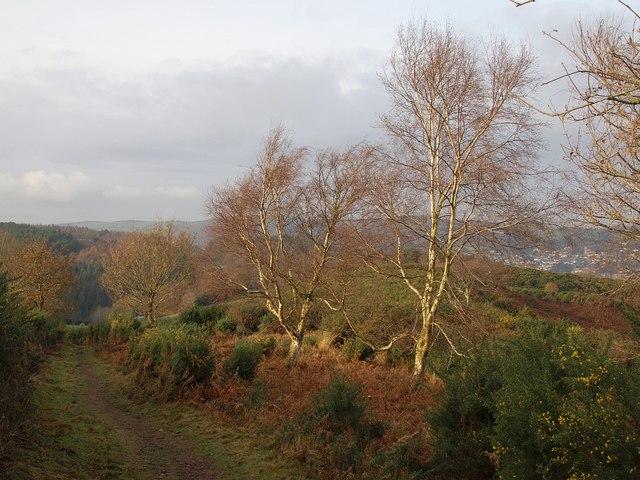 Ellicombe Common