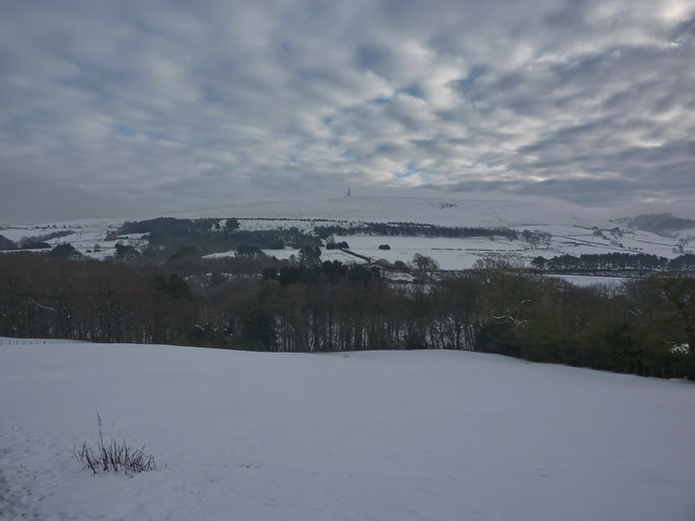 View towards Sunnyhurst Woods