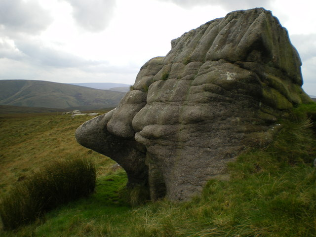 Nosey sphinx again - Bowland