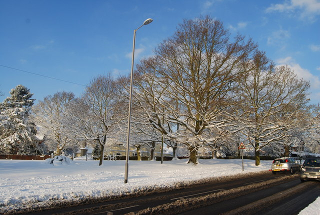 Trees on the edge of Southborough Common