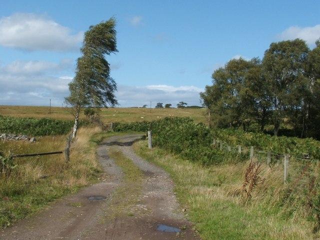 Track near Auchineck House