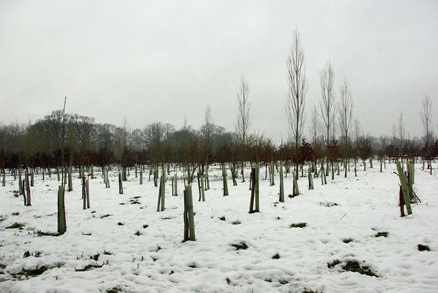 A new plantation