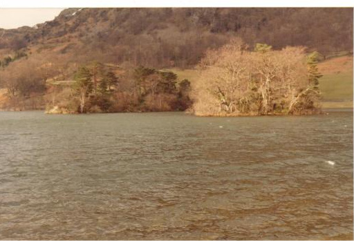 Wooded islands on Rydal Water
