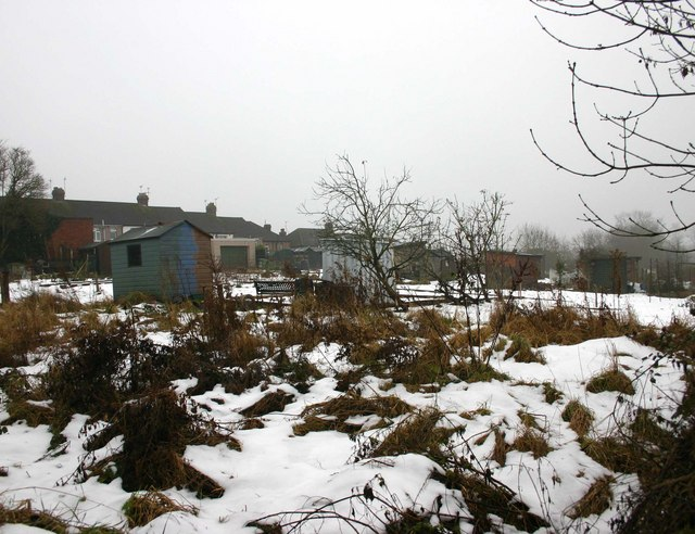Allotments in the snow