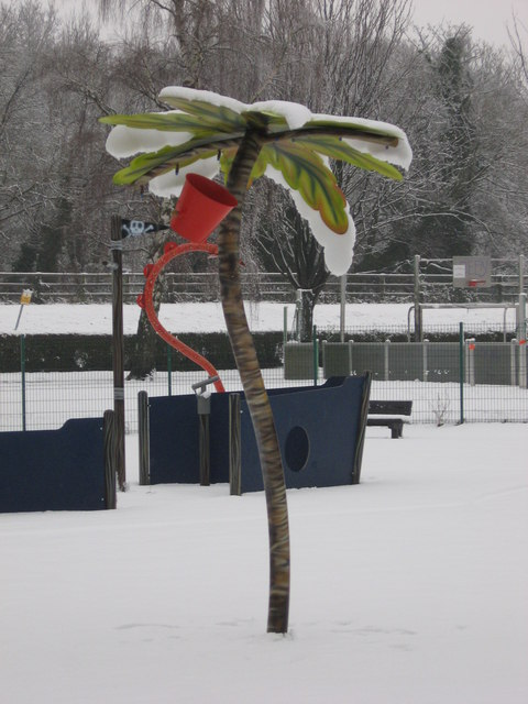 Frozen palm tree!