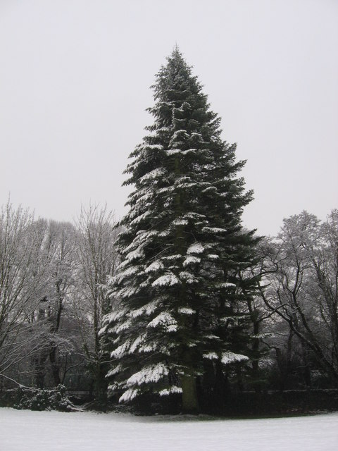 Proper Christmas tree?