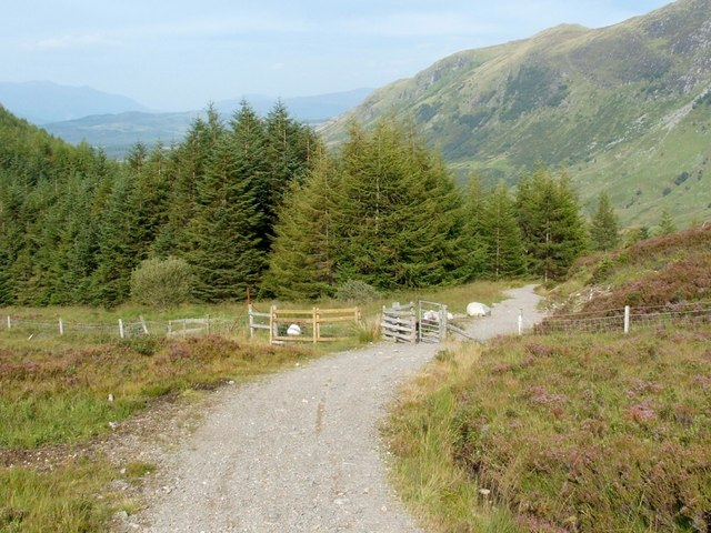 The Peat Track