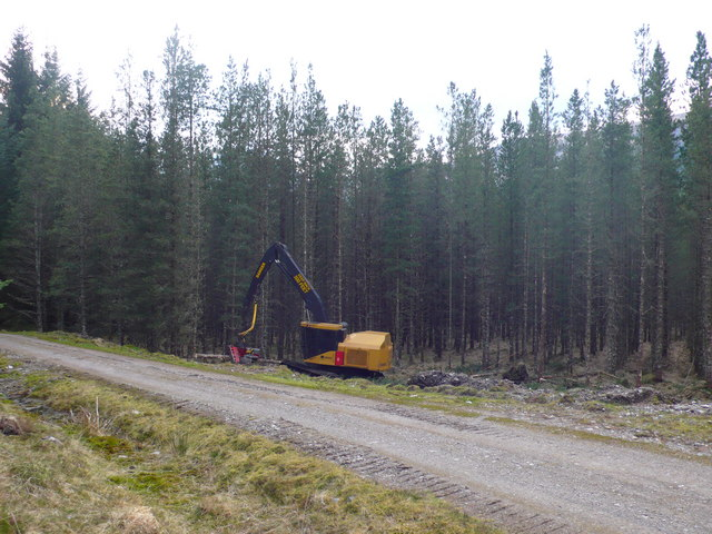 Forest management, Forestry Commission land Craig