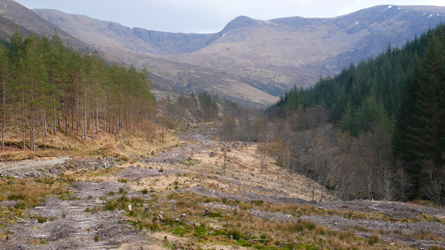 Managed forestry at Craig