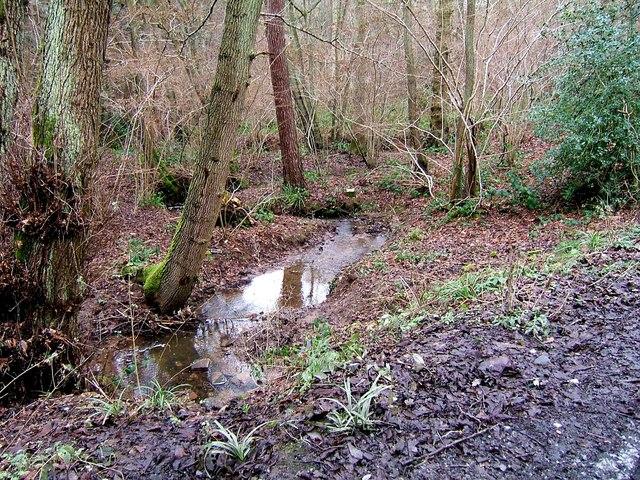 Stream in Eymore Wood