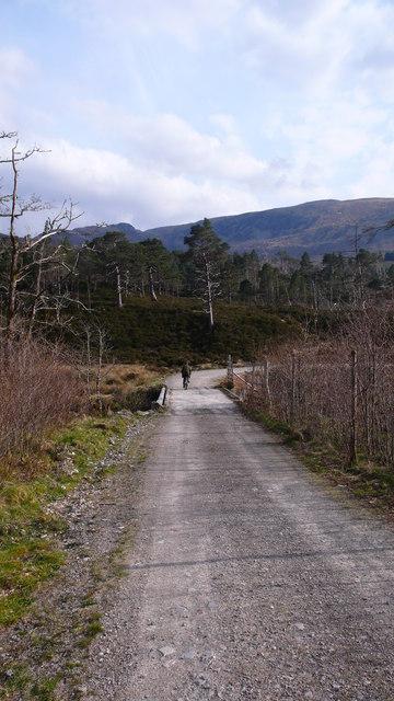 Caledonian woodland at Craig