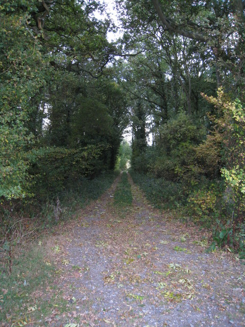 Track into Bell's Copse