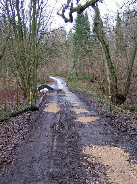 Recently repaired forestry road in Eymore Wood