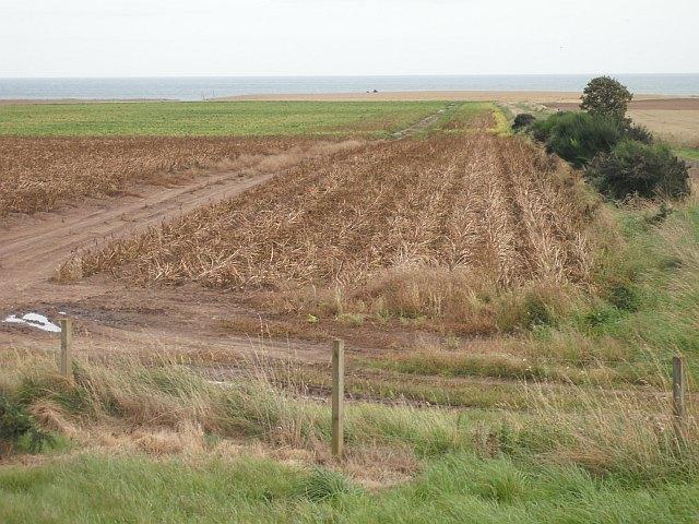 Potato field, Nether Kelly
