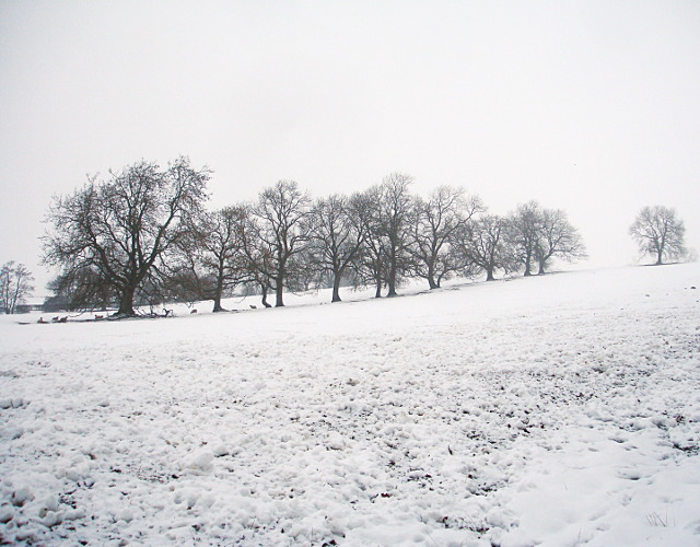 Old field boundary north of Grange Farm
