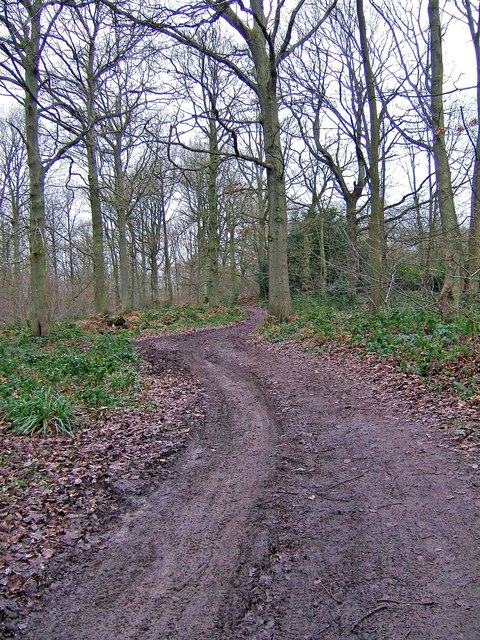 Forestry road, Eymore Wood