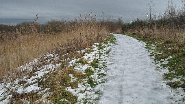 Woodland path, Langlees