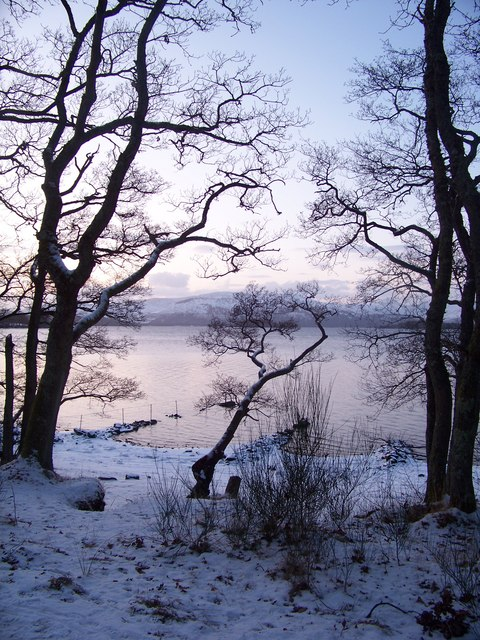 Shore Wood In Winter