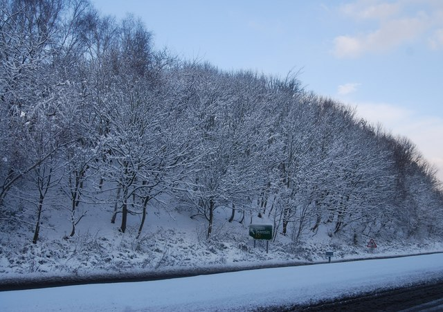 Wooded hillside by the A26