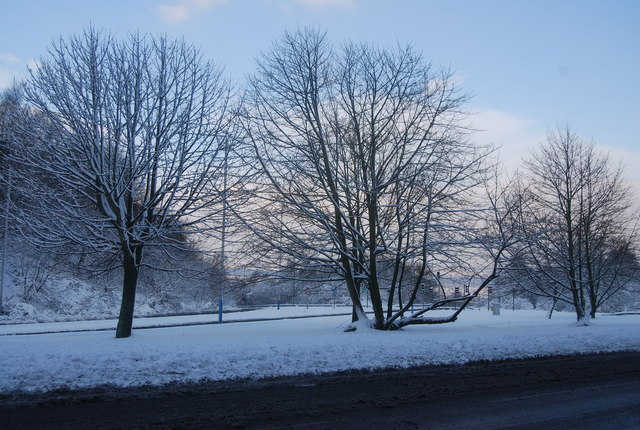 Trees in the middle of the A26 dual carriageway