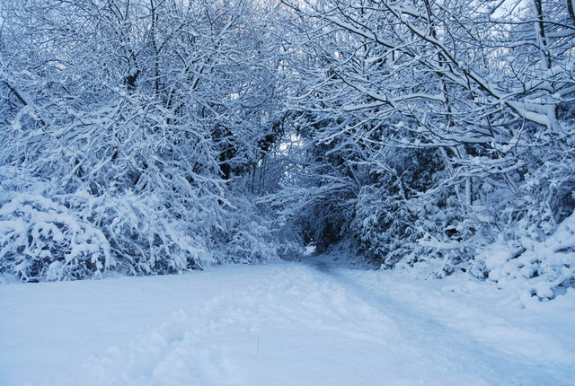 Footpath into the snowy trees, top of Quarry Hill
