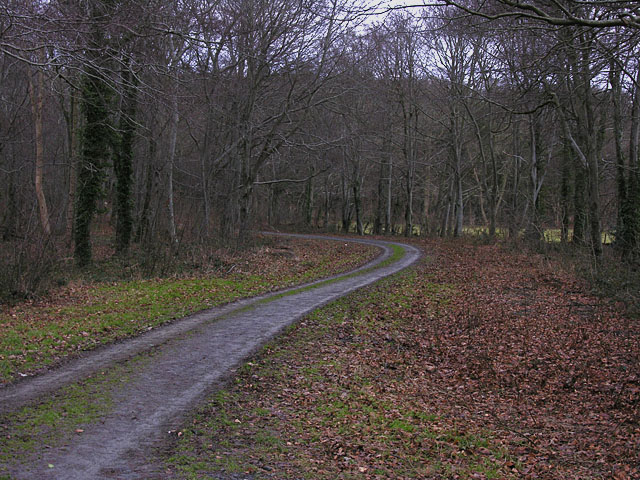 Track leading into Allt Ddêl woods