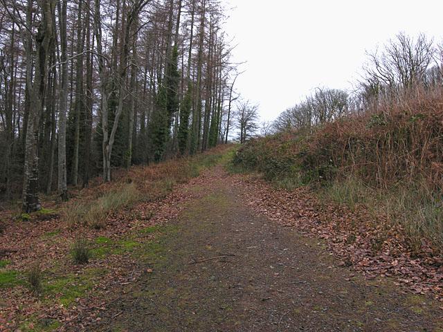 Path in the woodland on Allt Ddêl