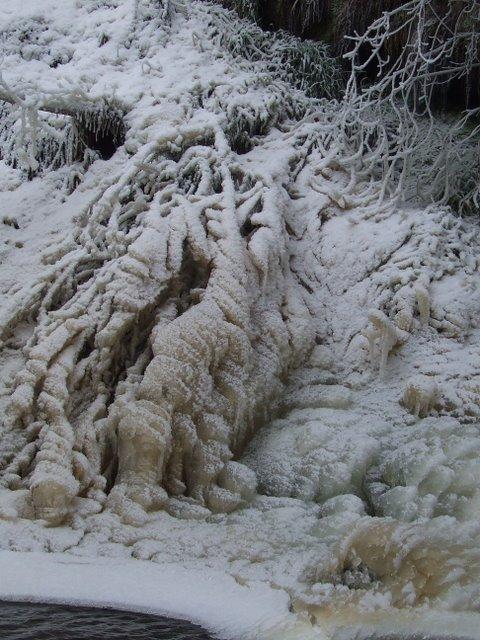 Frozen tree in Devol Glen