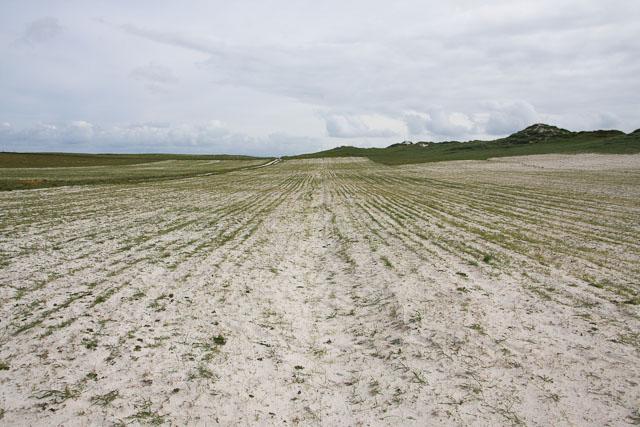 Arable field inland of Tràigh Iar