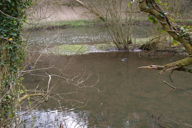 Stagnant pools by the River Wye