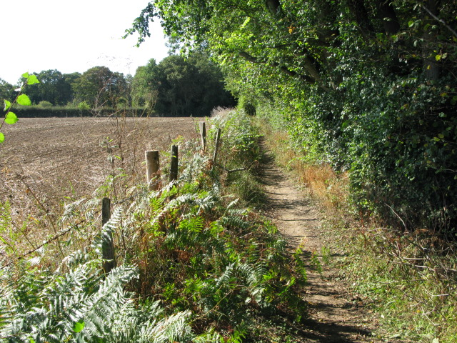 Footpath along the edge of Gorsehill Wood