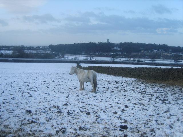 Pony above the M6
