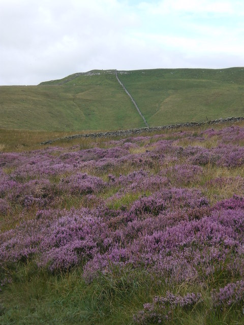 Blooming heather and stone walls