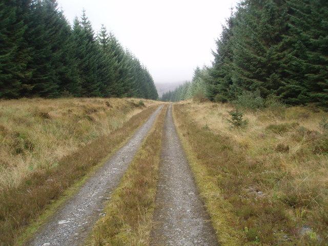 Forest track near Craignarget