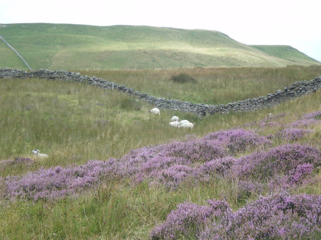 Dry stone wall roller coaster