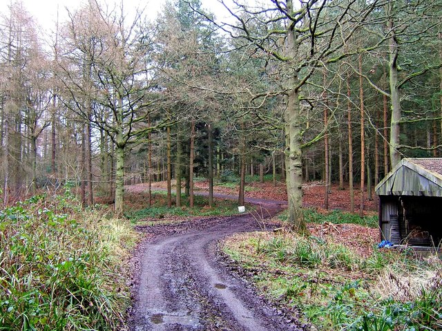 Forest road junction, Eymore Wood