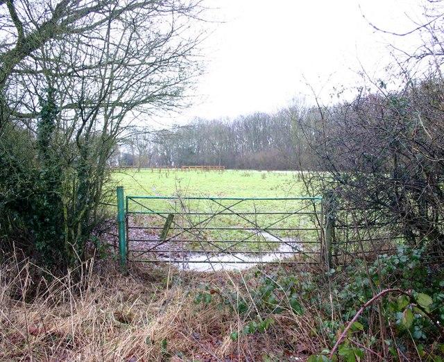 Overgrown gateway, South Cubbington wood